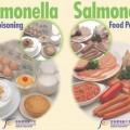 1-evitar a salmonella