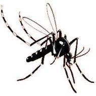 Vírus Chikungunya - Sintomas e Cuidados