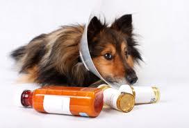 Como dar comprimido a um cachorro 01