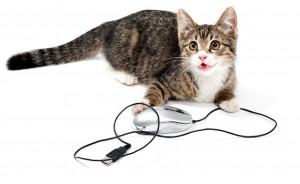 Evitar que gato mastigue fios de energia 01
