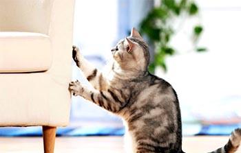 Gato que arranha os móveis 01