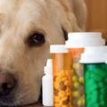 dar comprimido para cachorro