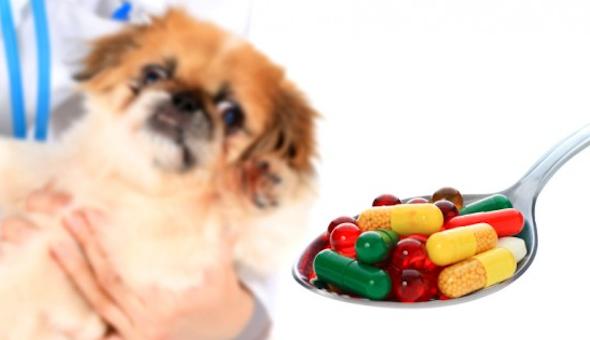 dar comprimido para cachorro4