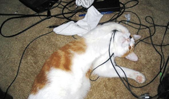 gato+mastigar+fio+energia2