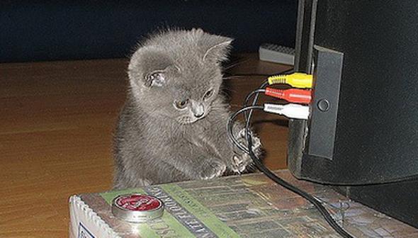 gato+mastigar+fio+energia3