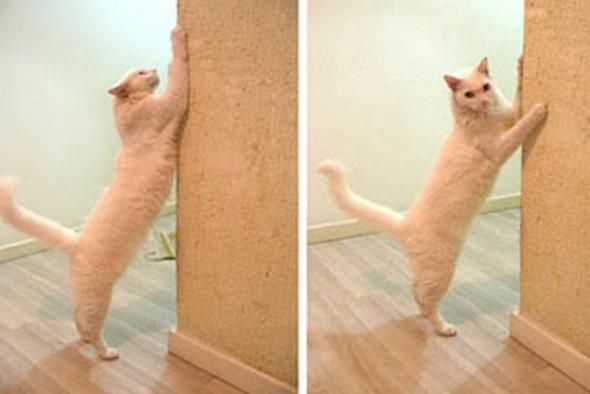 gato+que+arranha+os+moveis+o+que+fazer3