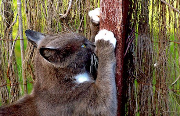 gato+que+arranha+os+moveis+o+que+fazer6