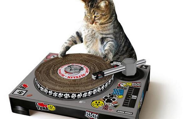gato+que+arranha+os+moveis+o+que+fazer9