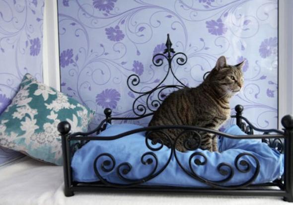 Como montar um quarto para gato