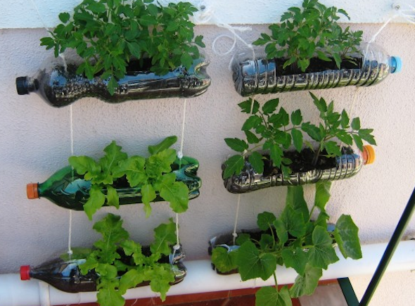 Como fazer um jardim vertical em sua casa ou apartamento 7 dicas e