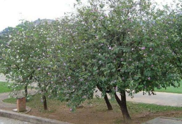 3-Árvores certas para plantar na calçada
