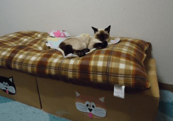 3-Como_criar_uma_cama_para_gatos_