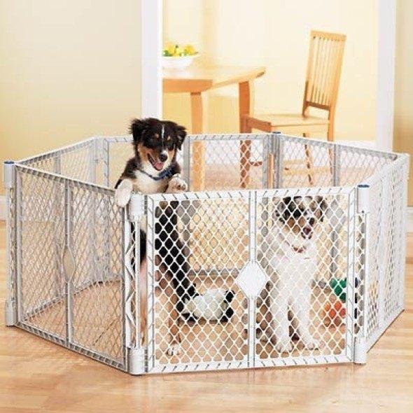 Arquitetura-moderna-para-cachorros-011