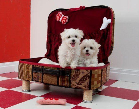 Como-criar-cama-para-cachorro-005