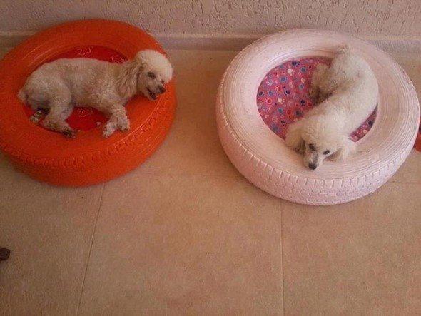 Como-criar-cama-para-cachorro-008