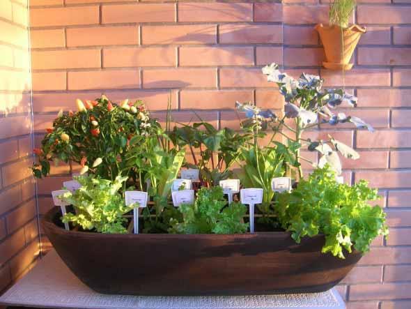 Mini horta em casa 012