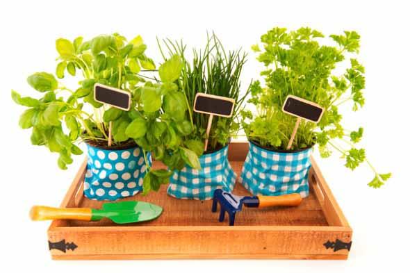 Dicas para montar uma boa horta em casa 004