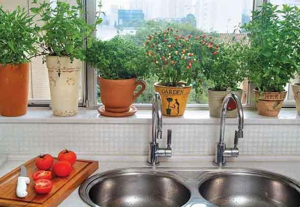 Onde colocar plantas dentro de casa 007
