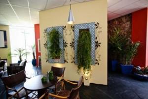 Onde colocar plantas dentro de casa 015