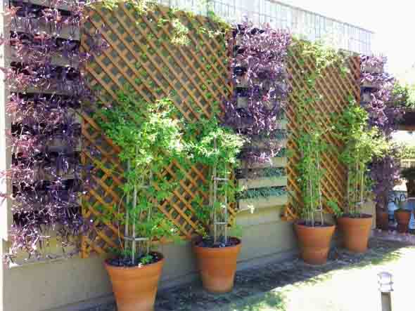 Jardim vertical com treliças pela casa 004