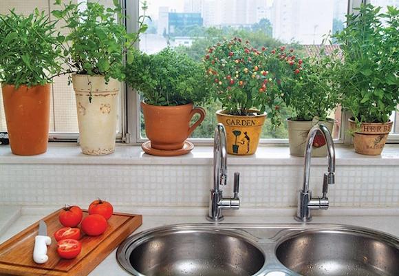 plantas na cozinha 1