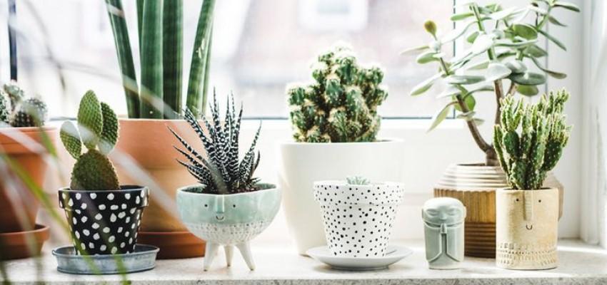 plantas na cozinha 10