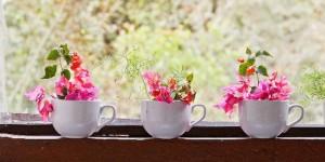 plantas na cozinha 5