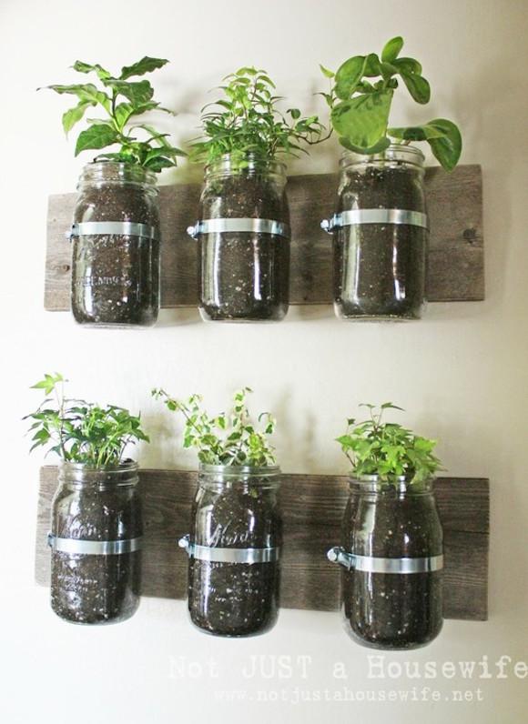 plantas na cozinha 8