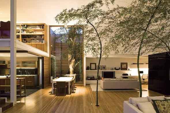 Árvore dentro de casa 001