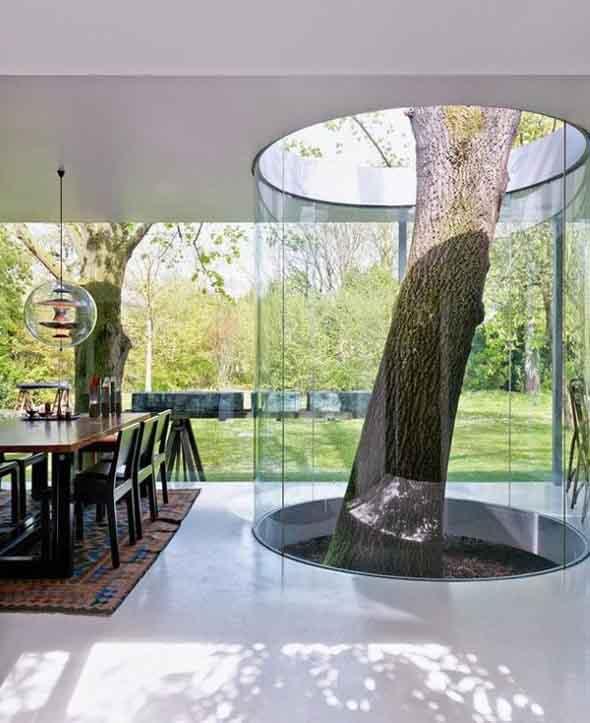 Árvore dentro de casa 005