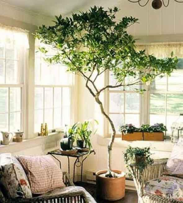 rvore dentro de casa. Black Bedroom Furniture Sets. Home Design Ideas