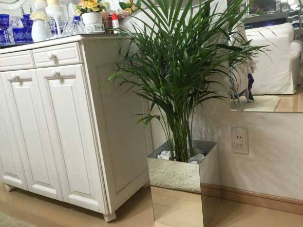 Vasos de plantas quadrados na decoração 004