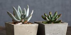 Vasos de plantas quadrados na decoração 014