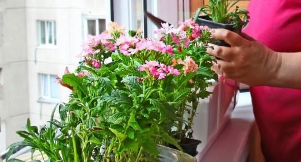 Vasos de flores na varanda 017