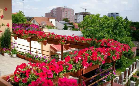 Vasos de flores na varanda 018