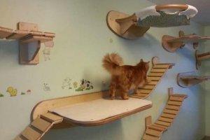 gato no apartamento