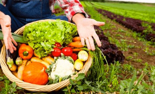 2-Alimentos_para_combater_o_stresse_em_5_dicas_e_alimentos