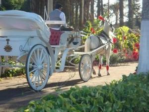 Casamento em sítio carruagem