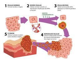 Quais os Órgãos mais Predispostos ao Câncer? 2