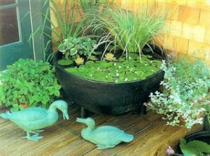 Jardim aquático 2