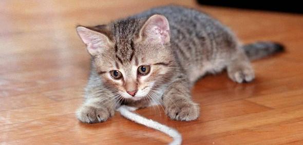 gato+mastigar+fio+energia4