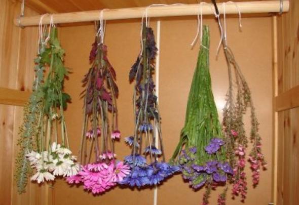 6 etapas de como secar flores em casa para decorar 1