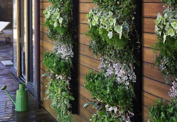 Montar um jardim vertical6