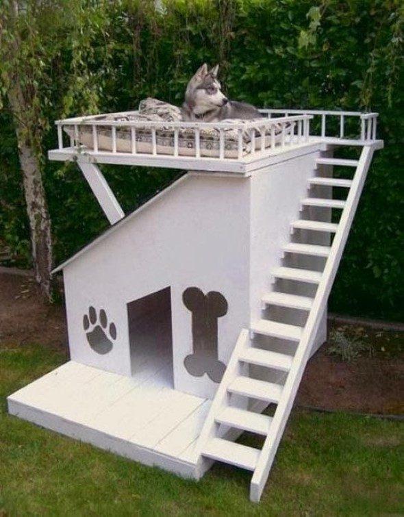Arquitetura-moderna-para-cachorros-012