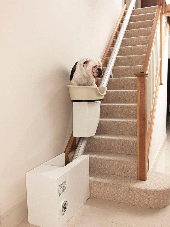 Arquitetura-moderna-para-cachorros-015