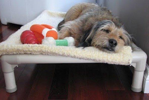 Como-criar-cama-para-cachorro-009