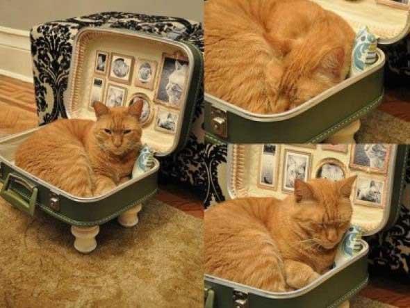 Móveis criativos para quem tem gatos 014