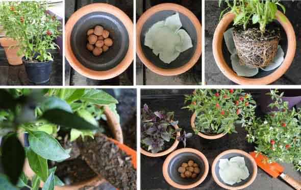 Mini horta em casa 006