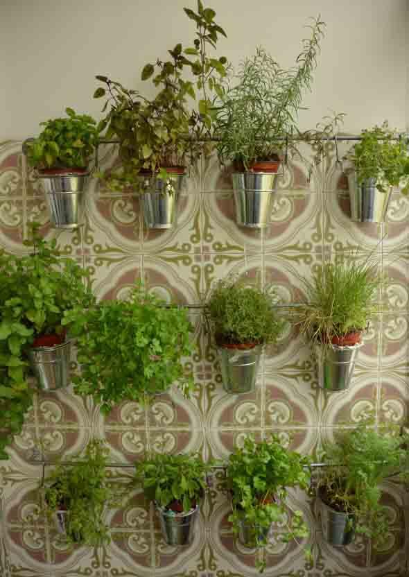 Mini horta em casa 013