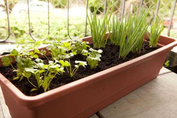 Dicas para montar uma boa horta em casa 003